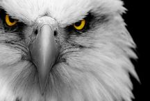 Eagle Pride! / The Eagle is the official mascot of Fort Bend Christian Academy.