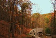 The Lough Cabin, Allegheny Mountains, PA / Where I write, hike, cook, bake, watch wildlife, and hone my 'identify the critter tracks' skills.