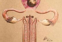 Fertility healing