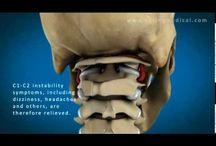 Anatomie CWK