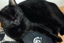 Lemmy the Heavy Metal Cat - Metaller.de / Lemmy der coole Heavy Metal Kater