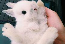 bunnies<3