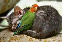 animaux en bonne entente
