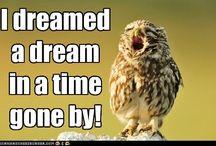 Owl by owlselves