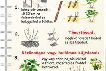 növényszaporítás