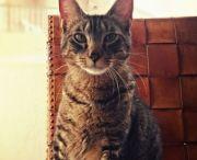 Gaturris: la familia felina / Imágenes de la creadora del podcast Gaturris y su familia felina.