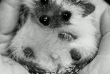 cute animals♥