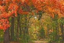 The scenic route... / Driving, walking, biking HOWEVER you get there, these are the paths to take.  / by Mary DiPuccio