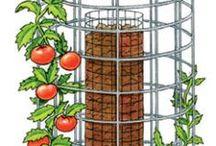 Garten Tomaten