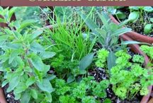 Herbs, etc