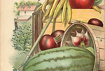 Vintage Seed Catalogs - Packets