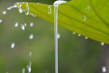 déšť - rain