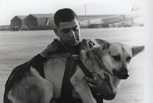 Airborne dogs