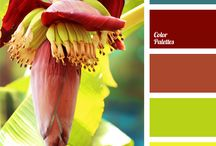 Colour combos / Colour palette