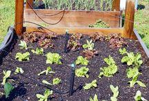Beginner garden