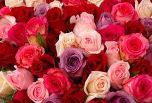 Valentine's Day <3 / by Nikki Worthy