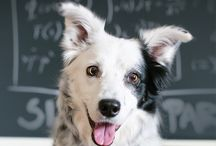 Border Collie Books / Great Border Collie Reads.