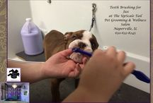 Puppy Grooming at The UpScale Tail, Pet Grooming Salon, Naperville / We gently introduce grooming to you puppy so create trust!
