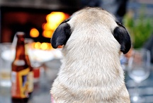 Pugs and other animals