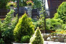 Mój ogród / Fotografie z zakątków mojego ogrodu, zdjęcia kwiatów, drzew i krzewów