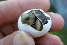Sea turtle  / Φυσική ζωή