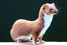 Some Weasels for Evil Abed  / NBC Community Street Team #CommuniePets. Like Farmville, with less stress.