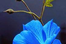 Flowers / by Deborah Howe