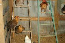 Hønsegård/hus