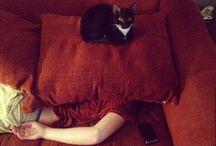 momos de gatos y nekos <3