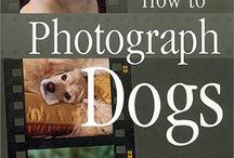 Pet photography / Dicas de fotografia