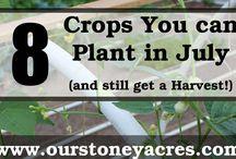 Vegetable Plantings for July