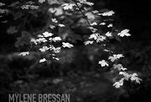 Mylene Bressan / http://photoboite.com/3030/2010/mylene-bressan/