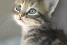 Cats / kittens / Chat / katten / Kitten cats chat katten