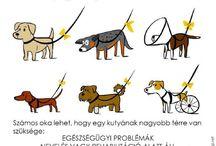 Hasznos, cikkek! / Beagles, kutyás cikkek.