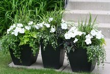 All about.....Gardening  / by Janet Wiebe