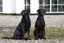 Zara og Zita / Vores dejlige hunde på møllen 2009-2015.  Fotos fra 23. februar 2015