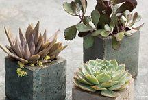 Garden / by Yvonne Reid