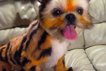 Dyed pets