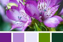 Colour Palettes / Colours for Scrapbooking and Decoration