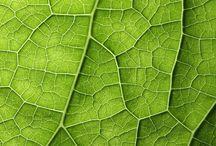 ~ organic shapes ~