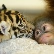 Cute, Adorable, Squishy