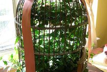 madárkalitka