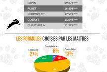 Infographie Animaux