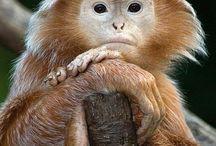 Reino Animal / Animales del Planeta Tierra / by Ruben Jimenez