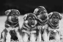 Puppy Love / by Katie Gingher
