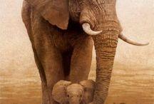 Animals / by Michelle Messemer