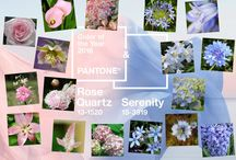 2016 Pantone Color of the Year / by Flower Duet