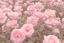 aes: flowers