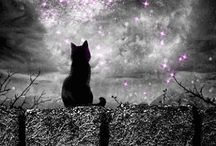 cat n the moon