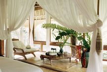 Home: Tropical Exotic Theme / by Steven Vanderville